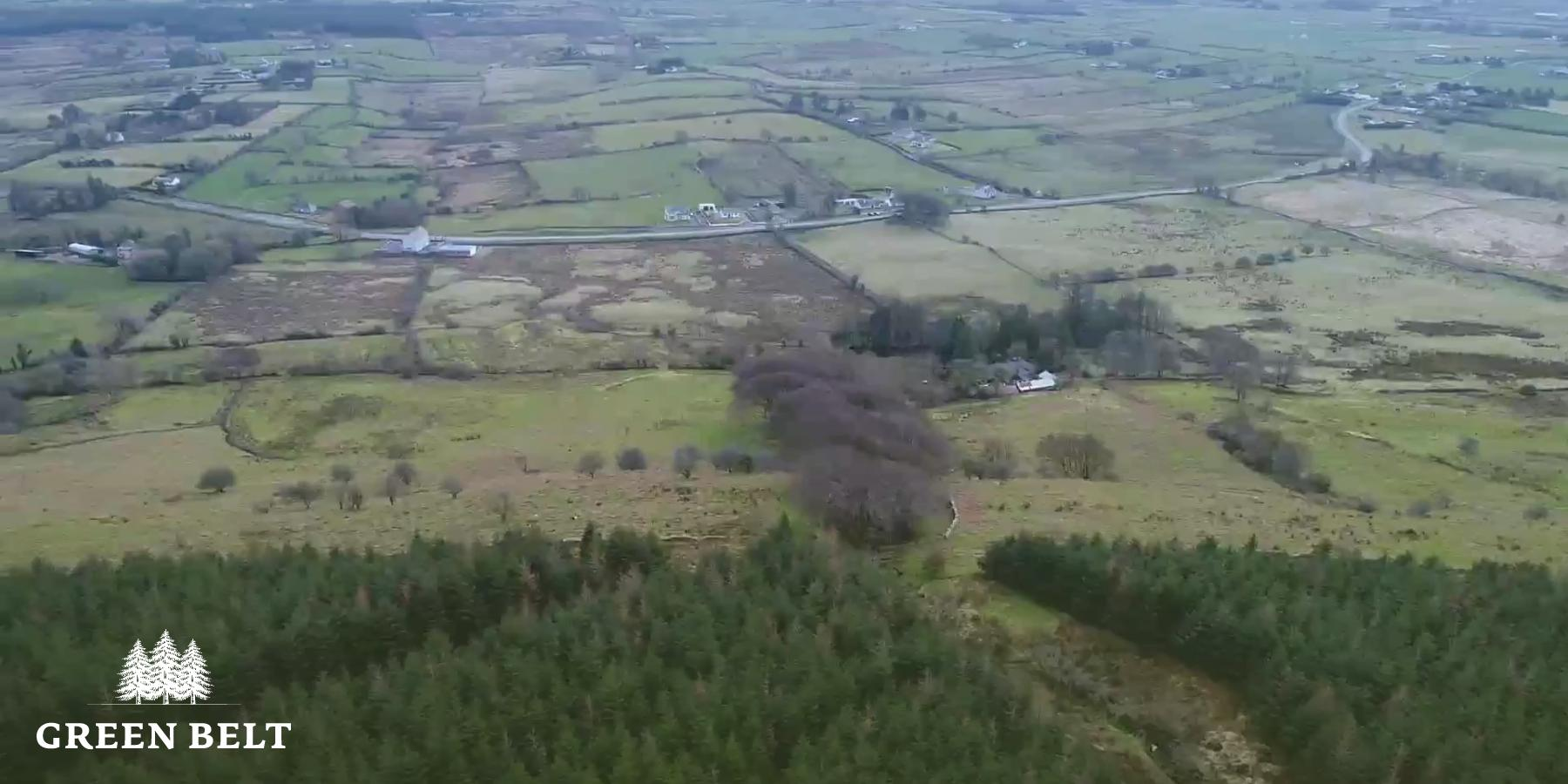 Forestry in Balla, Mayo for sale
