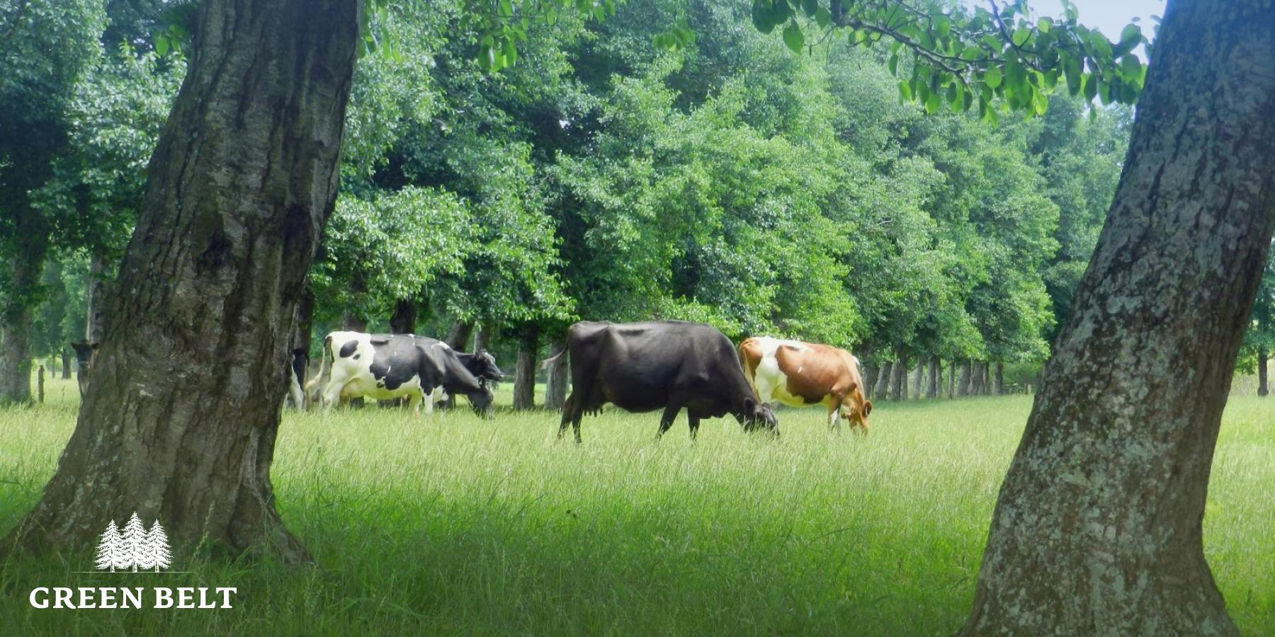 Natural land management