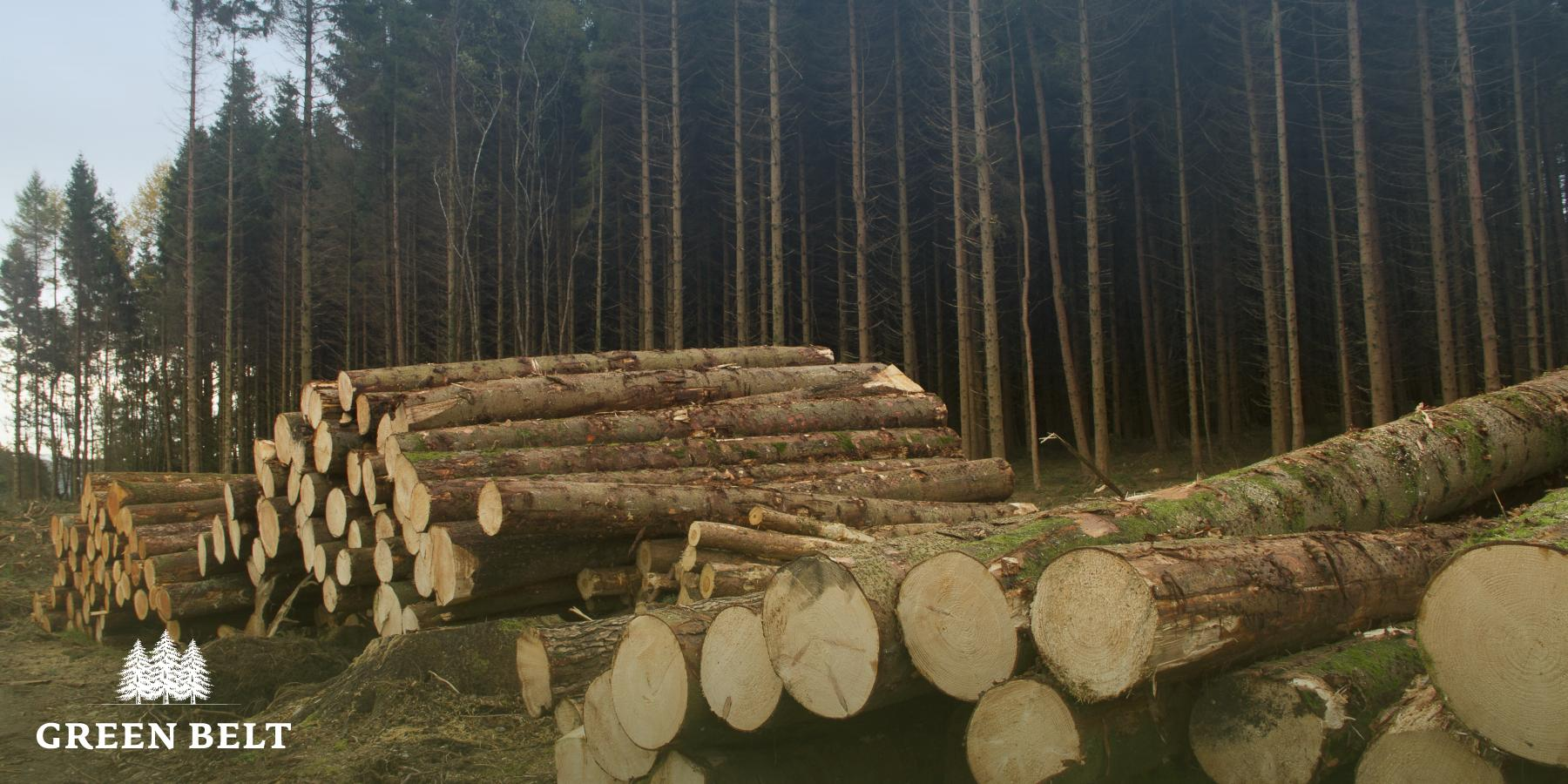 Timber Stacked in Forest