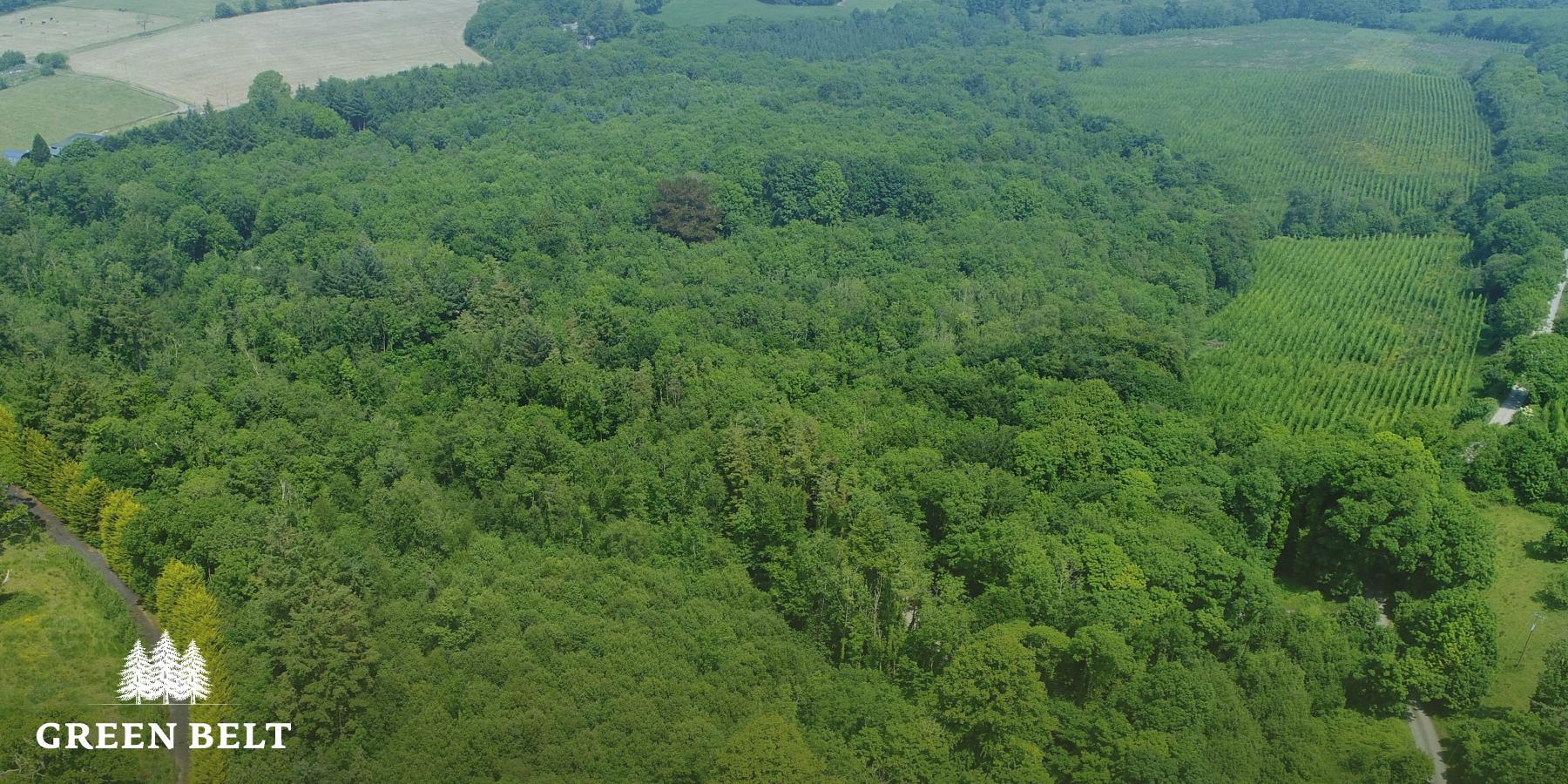 Irish Woodland Planting Trees