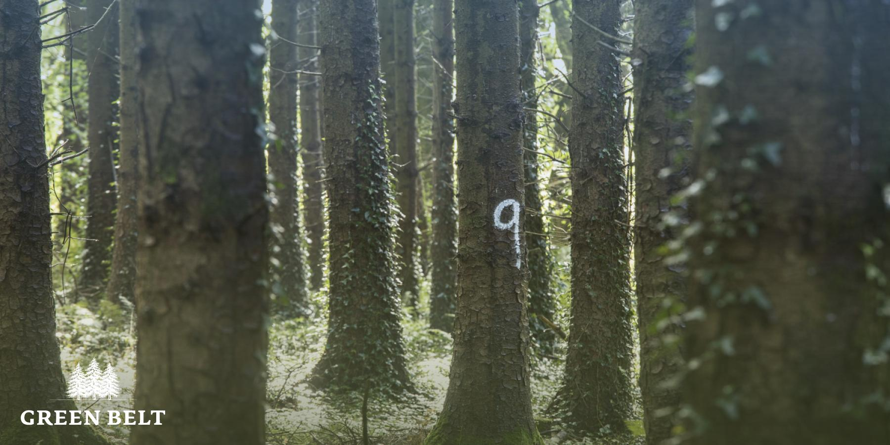 Forestry Measurement