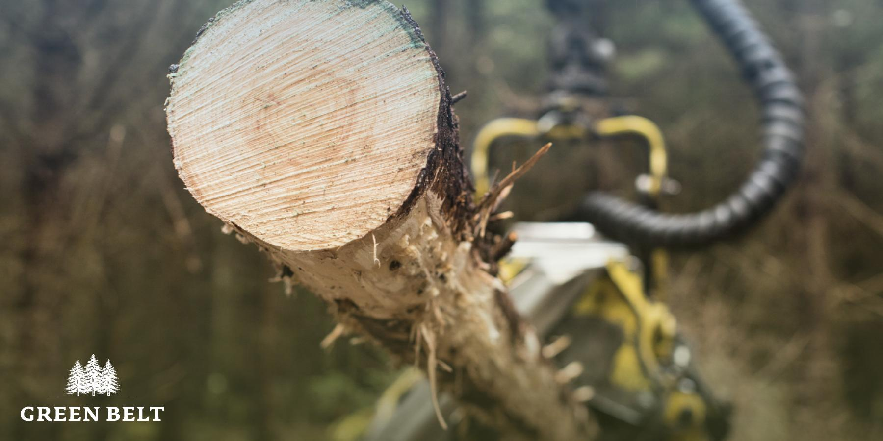 Green Belt - Your Forestry, Your Future | Green Belt