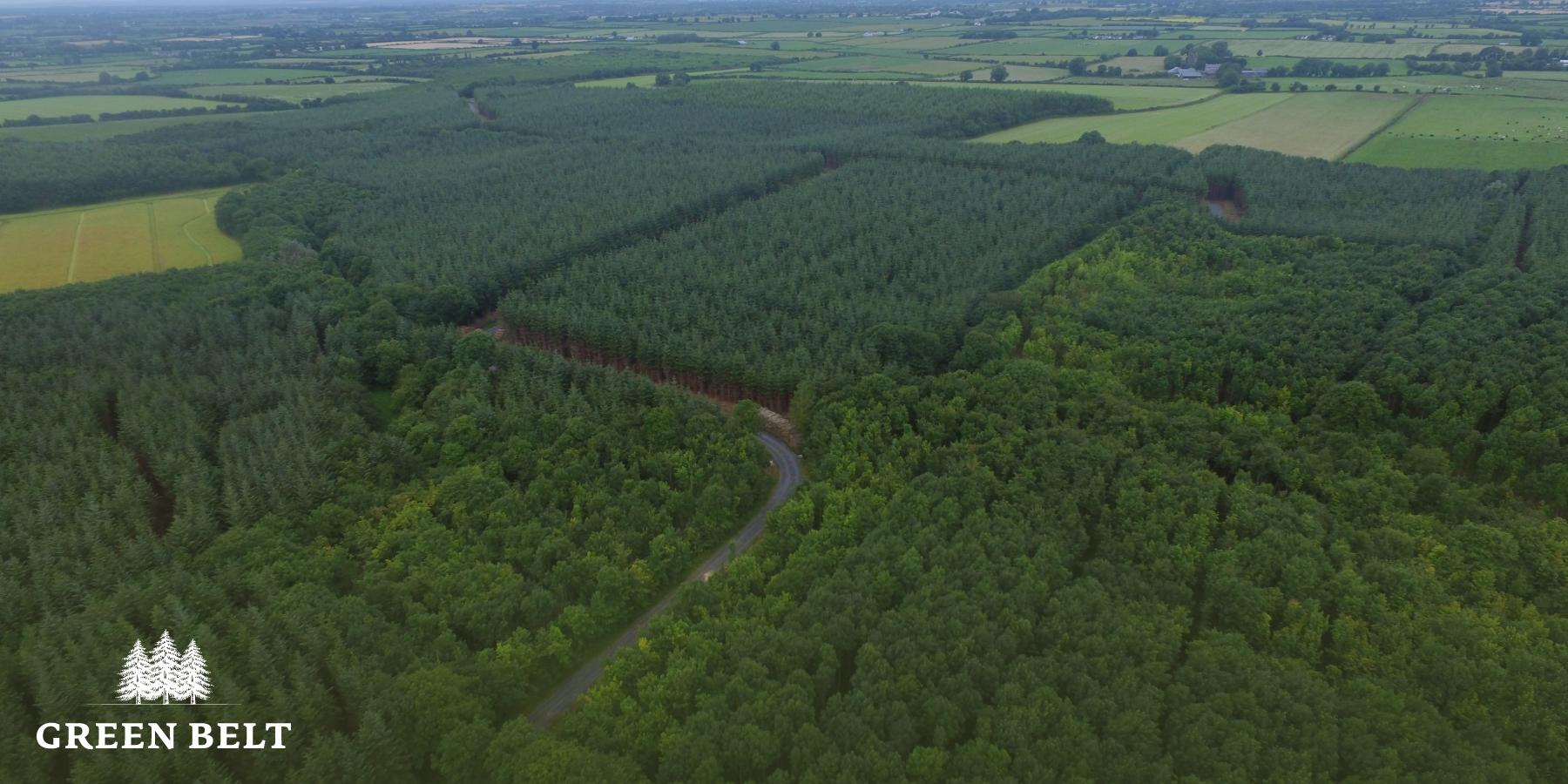 Forestry as a wealth protector