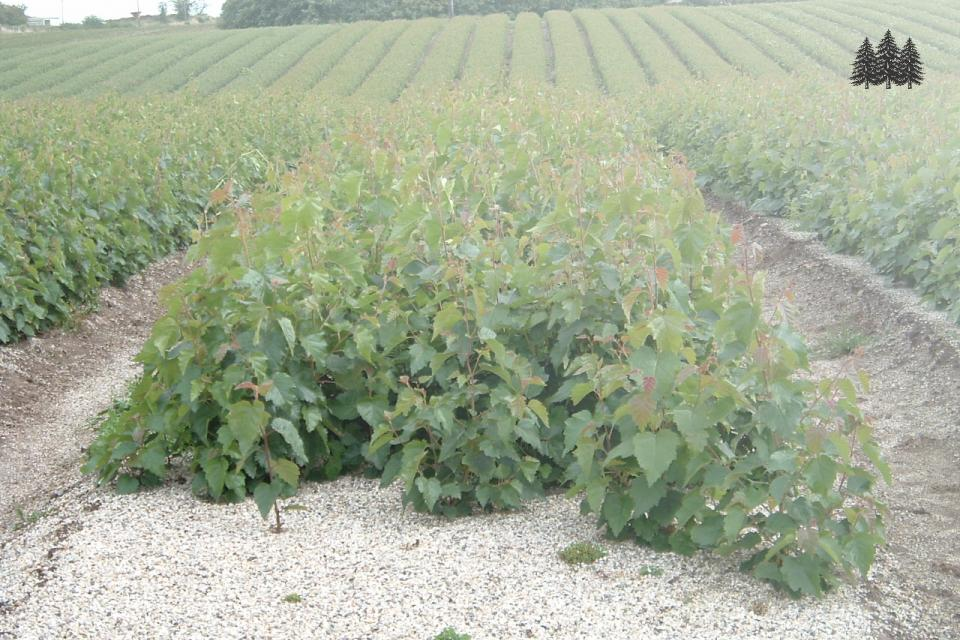 New planting decisions are urgent