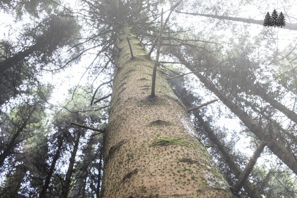 Forestry - the height of a good investment