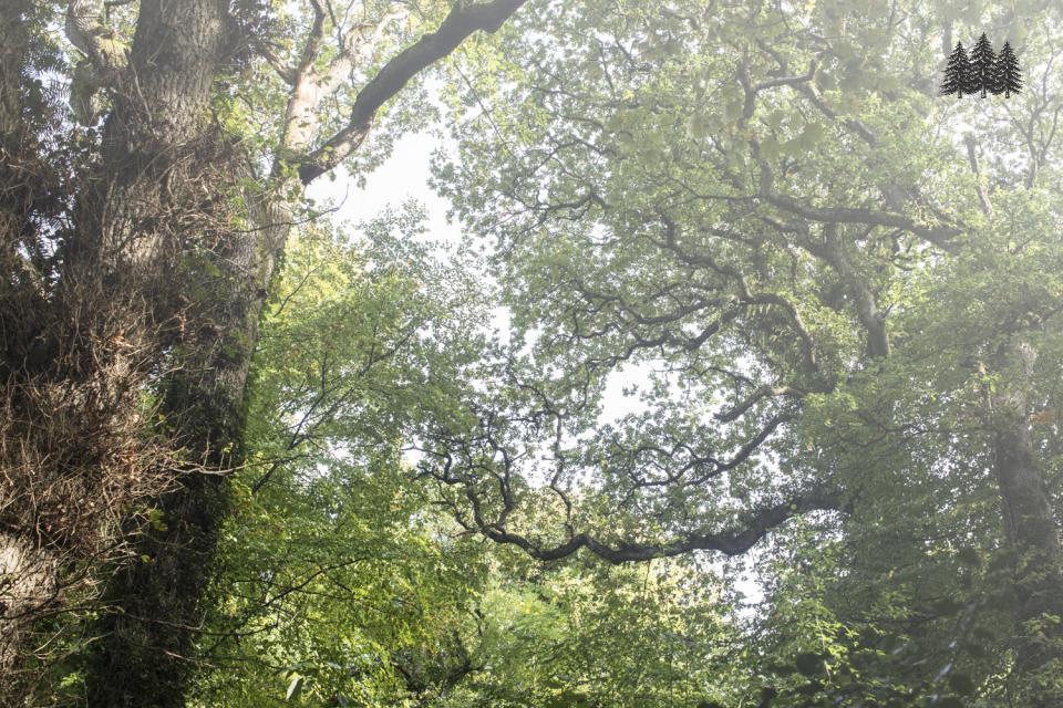 Mature hardwood woodlands