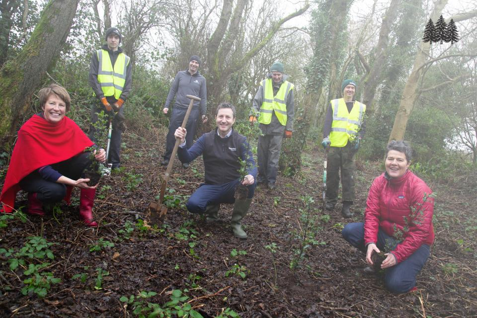Planting Holly trees