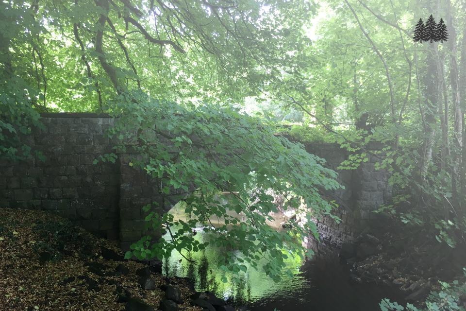 Woodland with Heritage Bridge